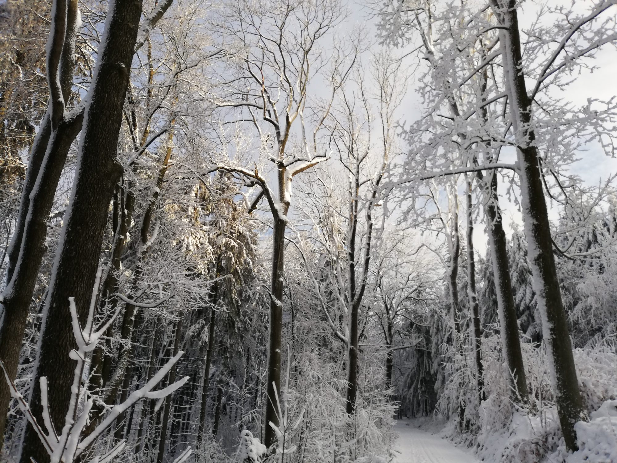 NaturFreunde Deutschlands – Ortsgruppe Wilthen e.V.